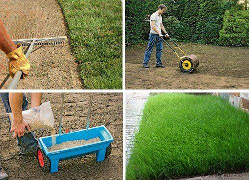 устройство посевного газона технология