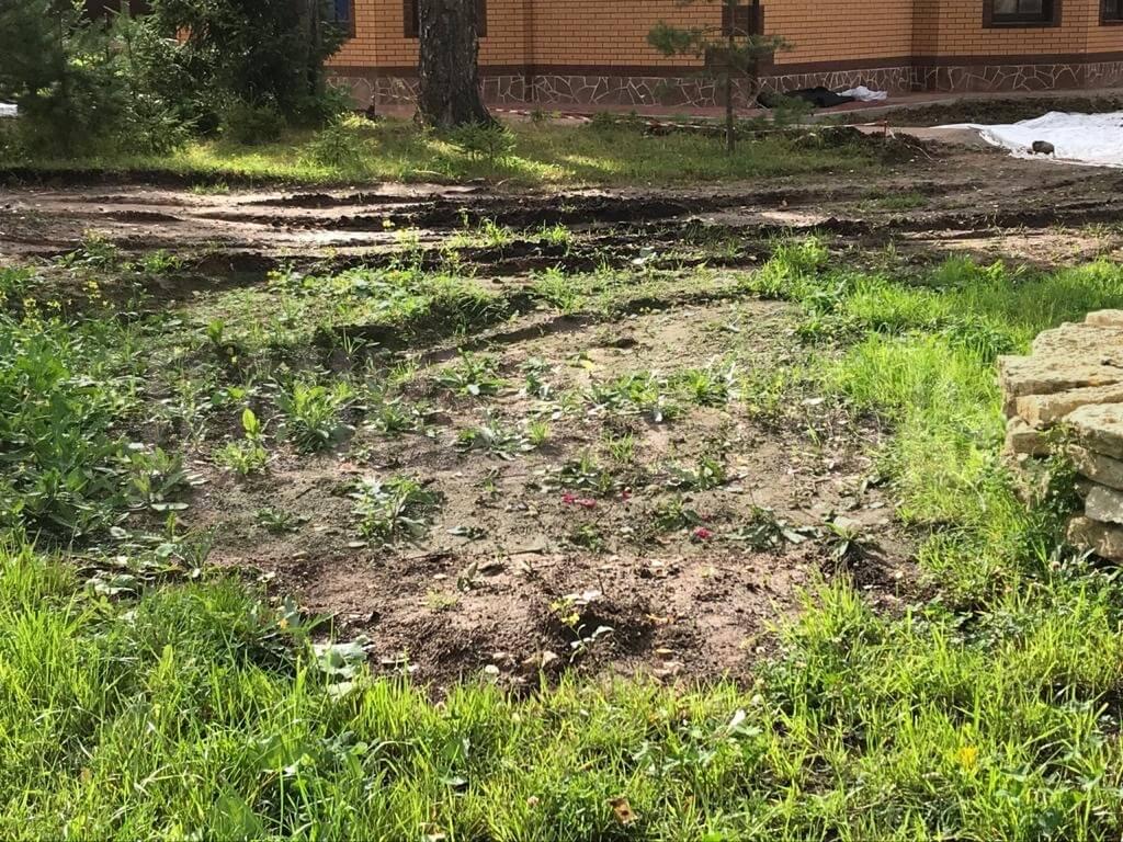 укладка посевного газона сиверский фото 1